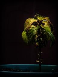 Planta 009